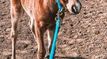 Surprise Mustang Baby