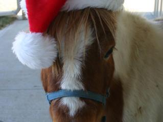 Merry Christmas Horse Friends