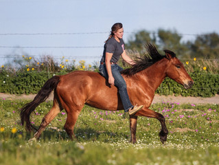 Claire Walsh- Mustang Trainer