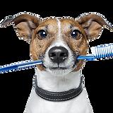 dog-toothbrush.png