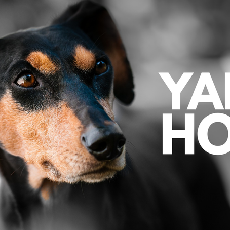 November Yappy Hour