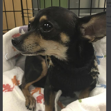 Found Dog - Need to Locate Owner