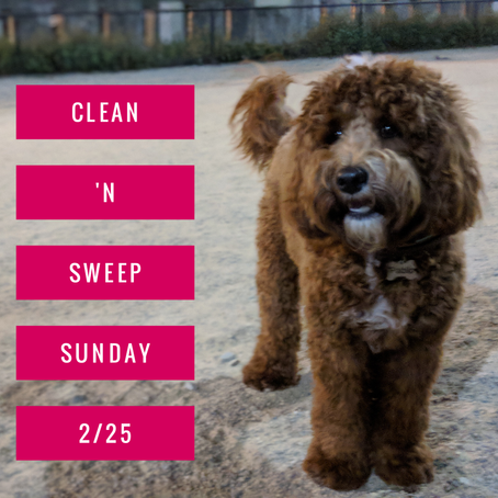 Clean and Sweep News Year of the Dog & This Weeks Updates