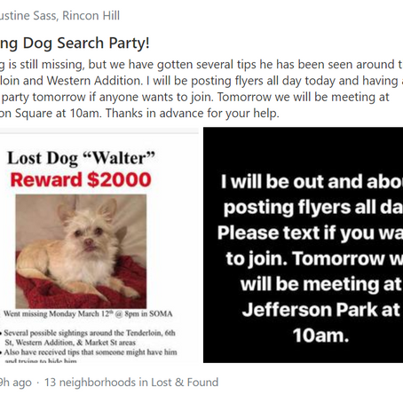 Sunday Missing Dog Search Party