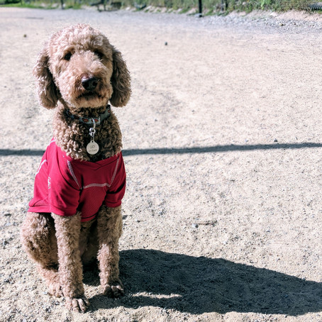 Dog Park Openers & Closers Needed