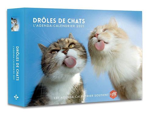 Drôles de Chats. Edition 2021