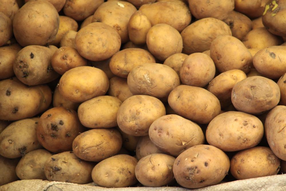 あずき色のジャガイモ