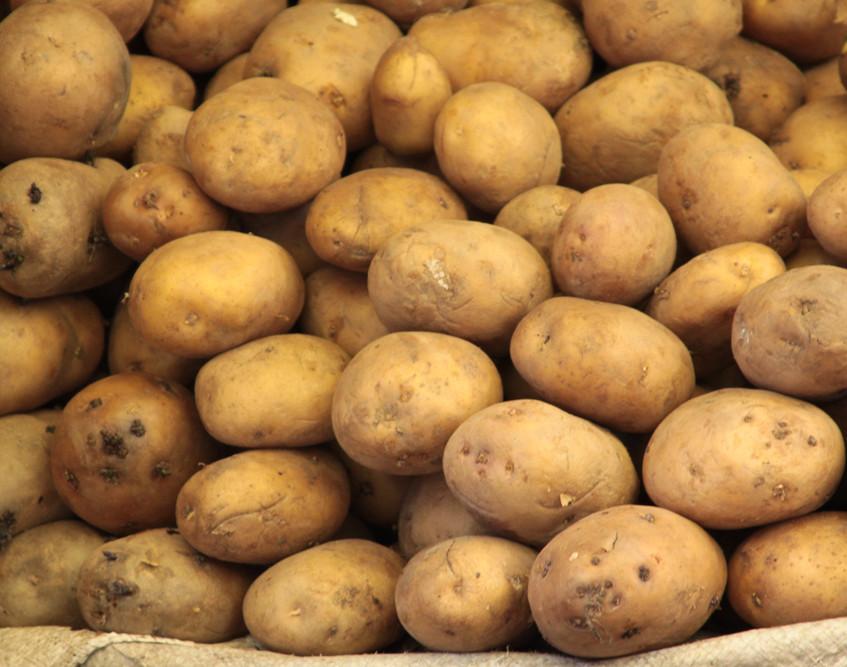Pommes de terre Russet