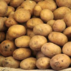 Potatoes and Pumpkin