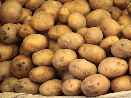 Idaho is no small potato
