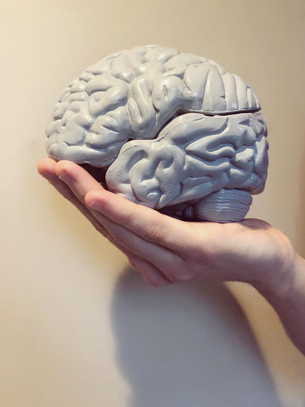 Hand holding a brain model #mentalhealth