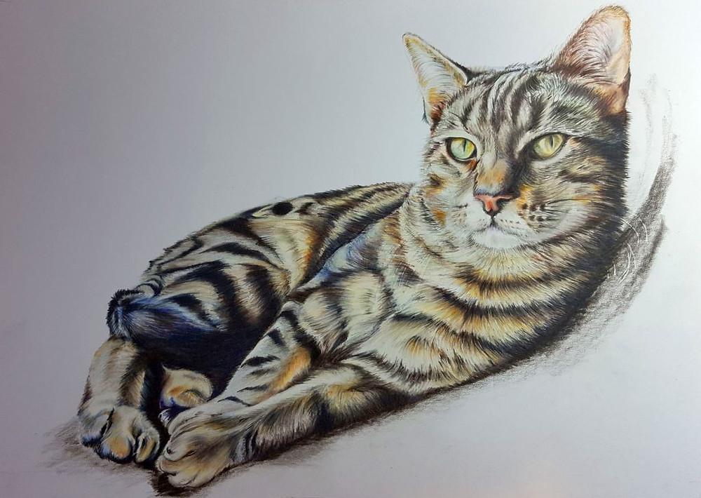 Tabby Cat Colour Pencil Portrait Claire Mills