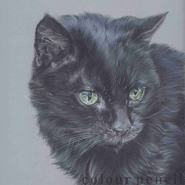 Black-Cat-Colour-Pencil-Portrait-Claire-