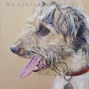 simba-long-haired-jack-russell-dog-portr