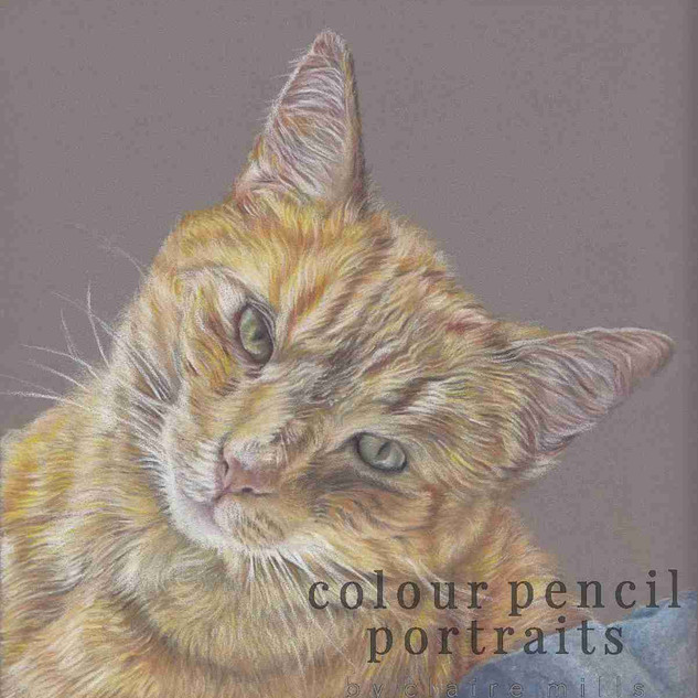 basil-ginger-cat-portrait-by-claire-mill