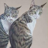 duke-duchess-tabby-cats-claire-mills-col