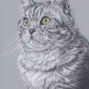 mikado-grey-cat-claire-mills-colour-penc