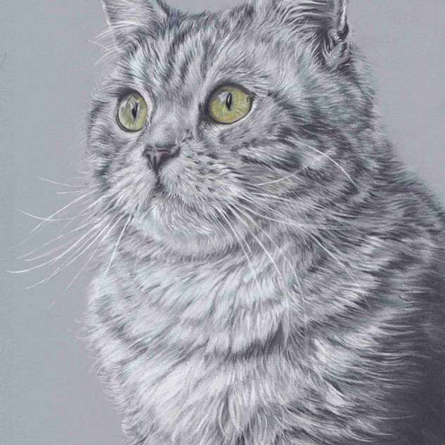 mikado-grey-cat-claire-mills-colour-penc
