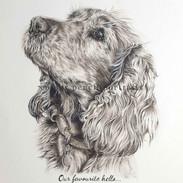cocker-spaniel-memorial-portrait-greysca