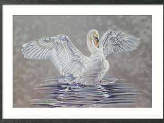 George the Swan