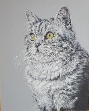 Mikado Cat Colour Pencil Portrait Drawin