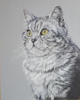 Mikado Cat Colour Pencil Portrait Drawin