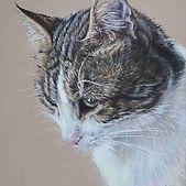 duchess-tabby-cat-claire-mills-colour-pe