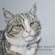 poirot-tabby-cat-claire-mills-colour-pen