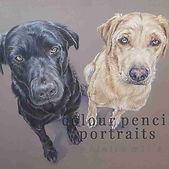 Jac-Maro-Labrador-Double-Dog-Colour-Penc