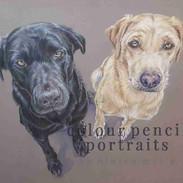 Jack-Maro-Labrador-Double-Dog-Colour-Penc