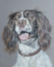 Springer Spaniel Dog Portrait by Claire