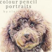 rocko-poodle-portrait-colour-pencil-port