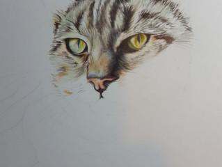 Tabby cat in progress...