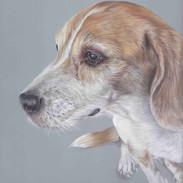 gracie-beagle-claire-mills-colour-pencil