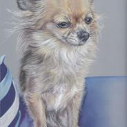 tinkerbell-chihuahua-portrait-colour-pen