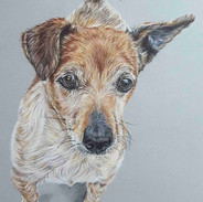 dipsey-jack-russell-claire-mills-colour-