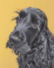 Peggy Black Cocker Spaniel Dog Portrait