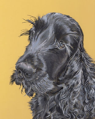 Peggy Black Cocker Spaniel Dog Portrait