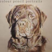 toby-chocolate-labrador-dog-portrait-by-