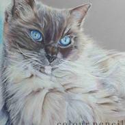 gabriel-rag-doll-cat-claire-mills-colour