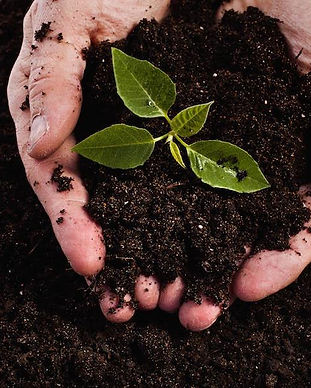 composting-image.jpg