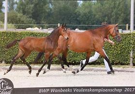 Rohan BWP Wambeek .jpg