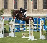 paard-1127-4720023-150710_edited.jpg