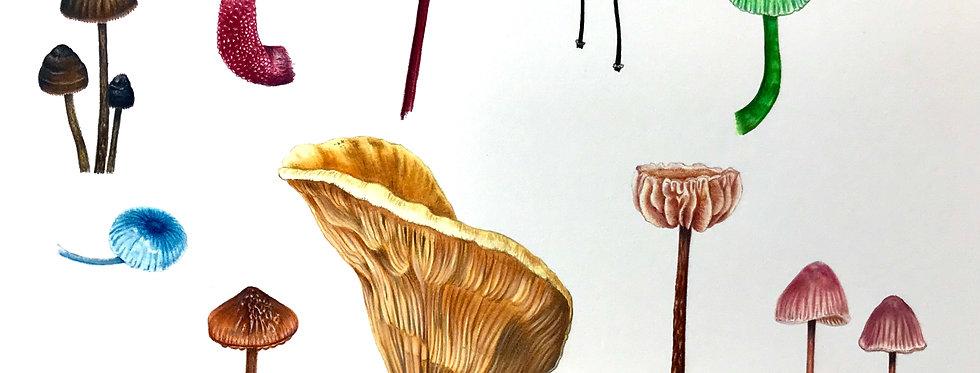 Art Print #1023 Rainforest Fungi