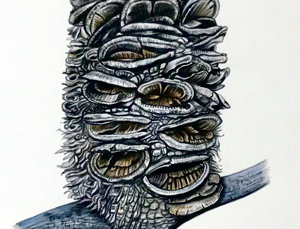 Art Print #1024 Silver Banksia Cone