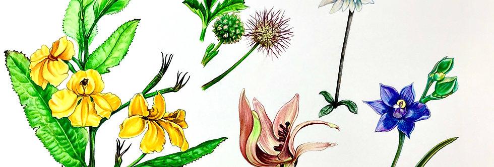 Art Print #1014 Groundcover Flowering Plants