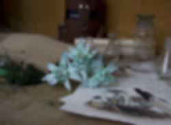 edelweiss-4550629_1920.jpg