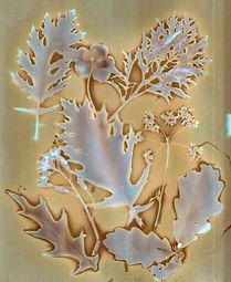 Lumen Karen Ferris New Roots.jpg