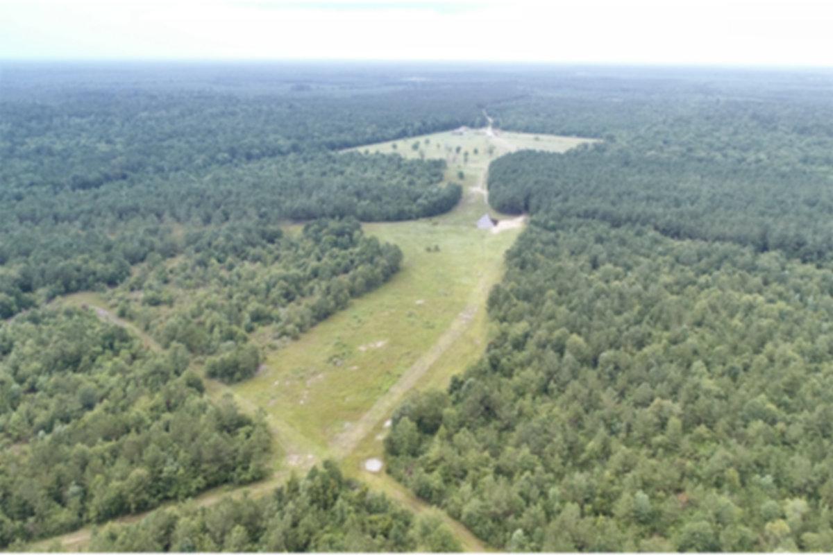 Field Site.jpg
