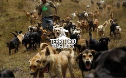 Territorio-de-Zaguates-front